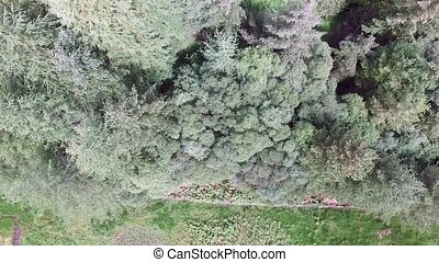 Aerial of a forest in Argyll with fence