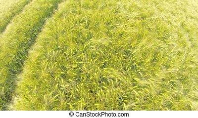 Aerial of a grain field - Aerial video footage of a grain...