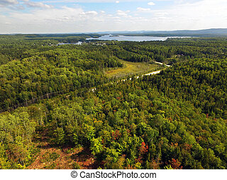 Aerial of beautiful forest with lake