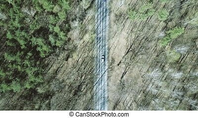 Aerial of car road in the forest