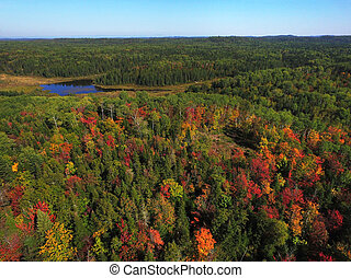 Aerial of colorful fall forest