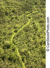 Aerial of forest trail.