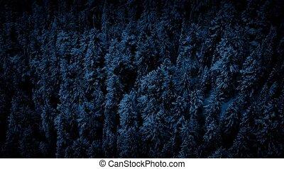 Aerial Of Frozen Forest In The Dark
