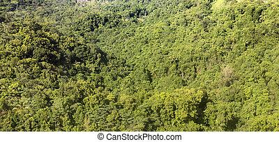 aerial of jungle, coast and ocean in Dominica
