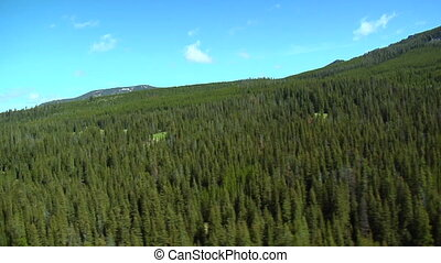 Aerial of pine forest