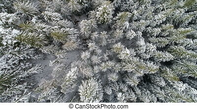 Aerial of pine trees covered with snow 4k - Aerial of pine ...