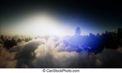 aerial over clouds in pine tree highland forest - clouds in...