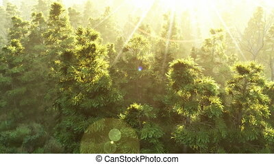aerial over forest at sunset