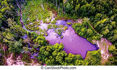 aerial over pond and forest