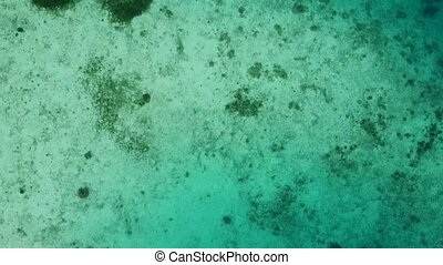 Aerial overhead view of beautiful coral reef on a sunny day.