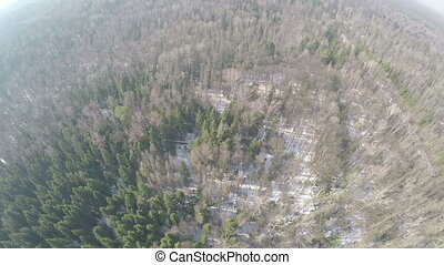 Aerial panorama of winter mixed forest landscape