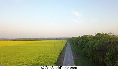 Aerial panoramic video from a drone a bird's eye view to the field with bright-yellow flowering plant Rapeseed and strip of green plantations along the road. 4K video.