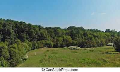 Aerial panoramic video from the drone, a bird's eye view to the forest with green plantings of various ages and heights. 4K resolution video.