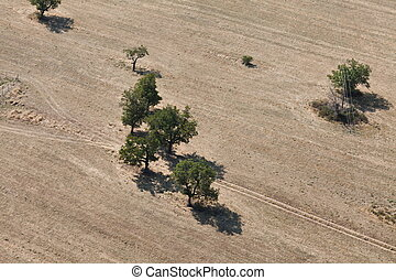 Aerial photo - Aerial photo view trees into agricultural...