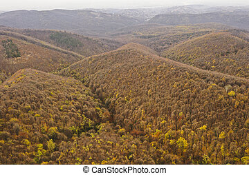 Aerial photo of a colored forest in autumn