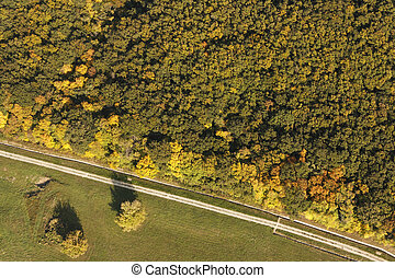Aerial photo of a forest and road