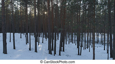 Aerial photo of sunset in winter pine forest