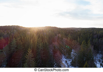 aerial photo of sunset over fir forest in winter season