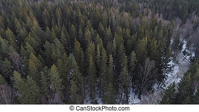aerial photo over fir forest in winter season