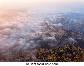 Aerial Photography of a Forest in Foggy Autumn Morning