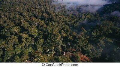 Aerial, Rainforest In Reserva Forestal Golfo Dulce, Costa...