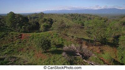 Aerial, Reserva Forestal Golfo Dulce, Costa Rica - Native...