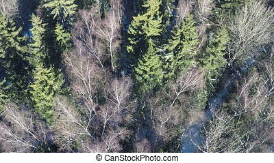 Aerial scene of mixed forest in winter - Aerial winter shot...