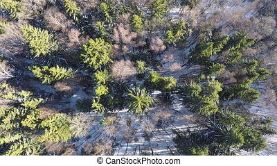 Aerial scene of winter forest with spruce and birch trees -...
