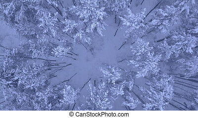 Aerial shooting of flight over the winter snowy pine forest in 4K UHD camera