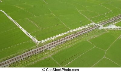 Aerial shooting rice field and railway in village. Aerial view worker on green rice plantation in Asian countryside. Agricultural industry. Farming and agriculture concept.