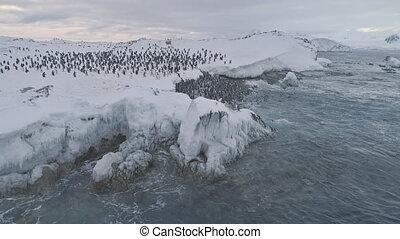 Aerial shot Antarctica penguins colony. - Antarctica...