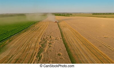Aerial shot: Combine harvesting on wheat field