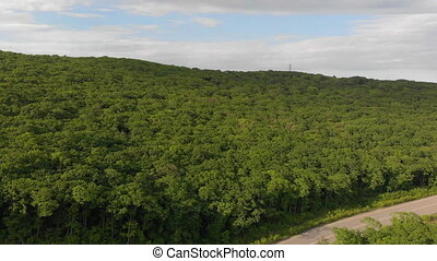 Aerial shot - drone moves above road and forest.