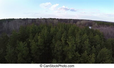 Aerial shot flight above the forest