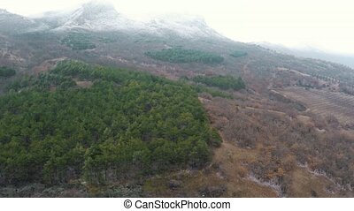 Aerial shot. Flight over the vineyard, pine forest and snow capped mountain peak