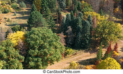 Aerial shot of a beautiful autumn forest with stunning multi-colored conifers and paths for people against the background of the city's houses. Top view on a sunny day of nature park without people.
