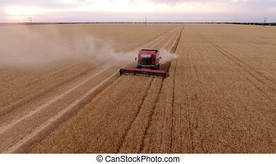 Aerial shot of a boundless golden field with an old chap on a combine harvester