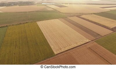 Aerial shot of a colorful agricultural field at a splendid...