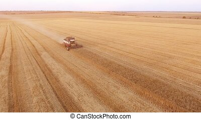 Aerial shot of a combine harvester going askew on a golden...