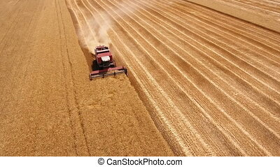 Aerial shot of a combine harvester reaping golden wheat in...
