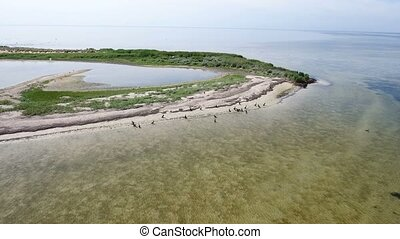 Aerial shot of a curvy seacoast sand spit in the Black sea with cormorants