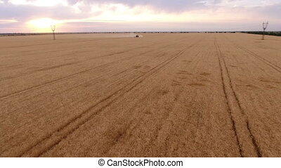 Aerial shot of a faraway combine harvester approaching fast...