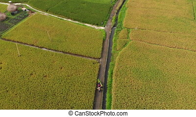 Aerial shot of a farmers on a motorbike driving along a path...