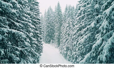 Aerial shot of a forest in heavy snow