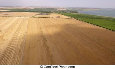 Aerial shot of a golden wheat field on a sunny day in summer