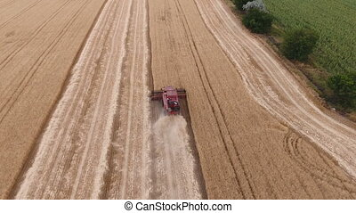 Aerial shot of a great golden field with an old buddy on a combine harvester