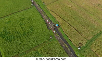 Aerial shot of a group of farmers that are moving along a...
