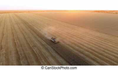 Aerial shot of a hardworking combine reaping wheat on a...