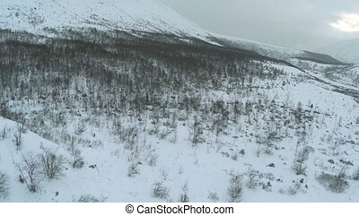 Aerial shot of a hillside with bare trees in winter