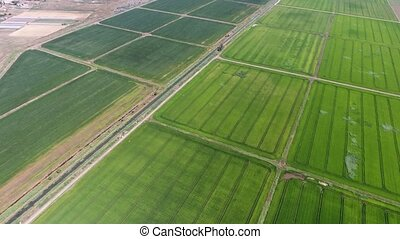 Striking view of gigantic multicolored green agro area on sunny day in summer. Country roads stretch out in a parallel way. Many ditches are seen too